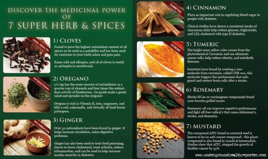Medicinal Power - Herbs & Spices